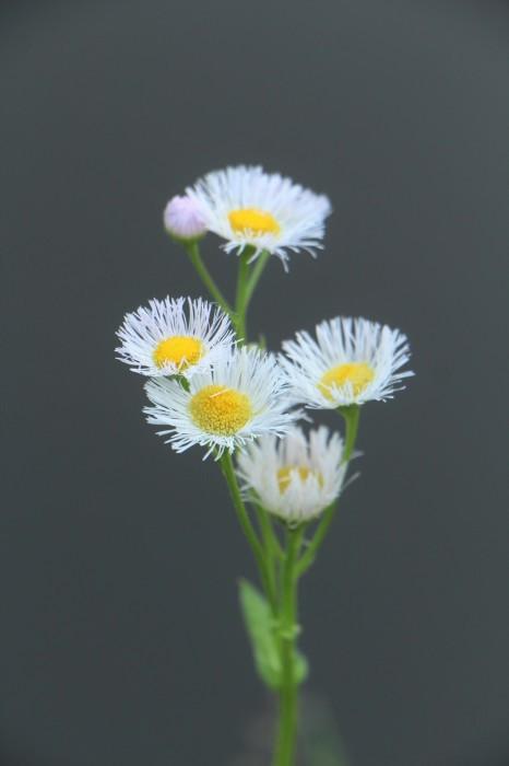 大宮公園 散策路に咲く 小さな花たち_d0150720_06340118.jpg