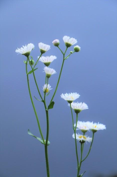 大宮公園 散策路に咲く 小さな花たち_d0150720_06343192.jpg