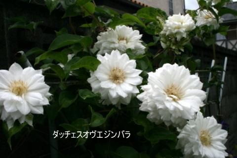 b0197433_10112825.jpg