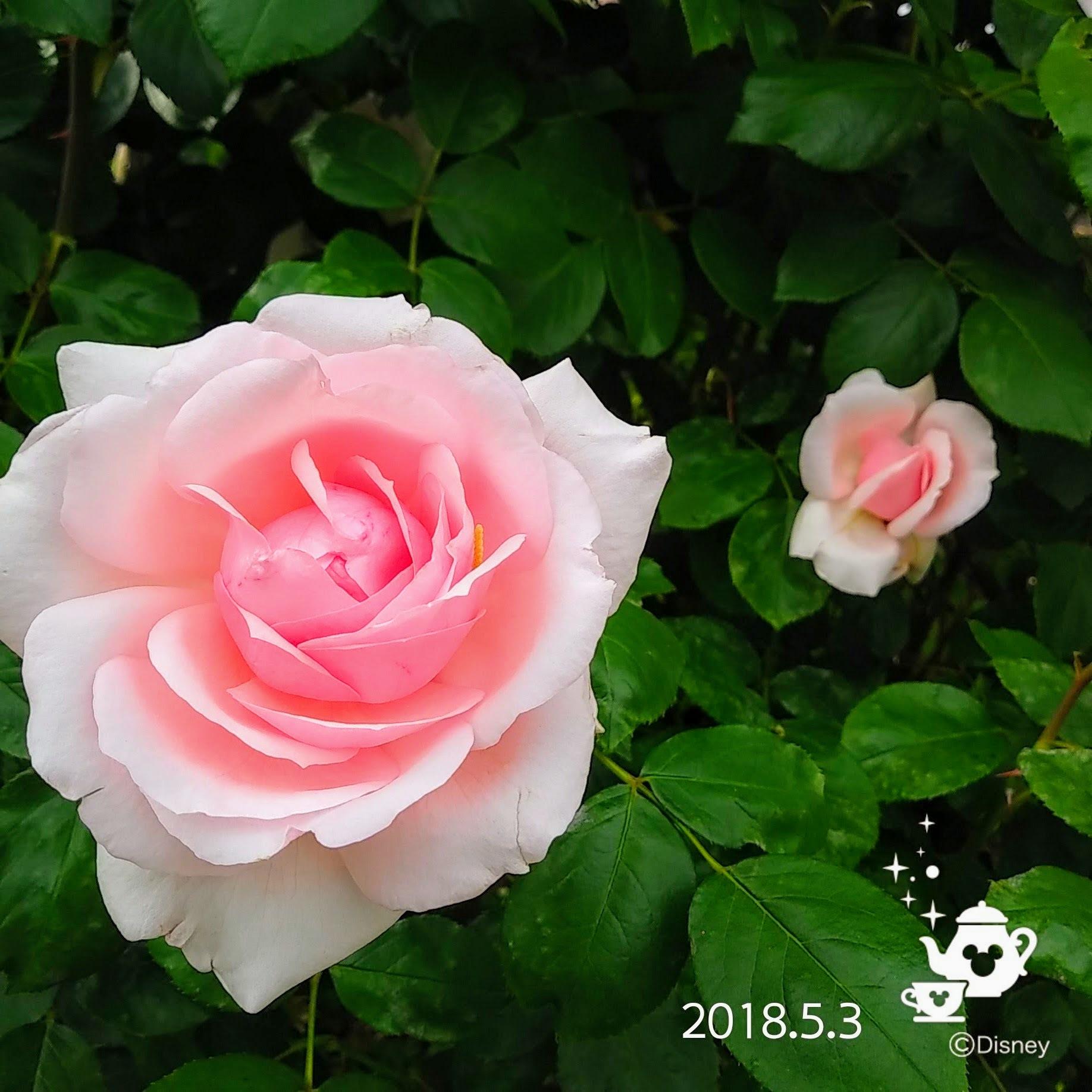 f0262033_16540971.jpg