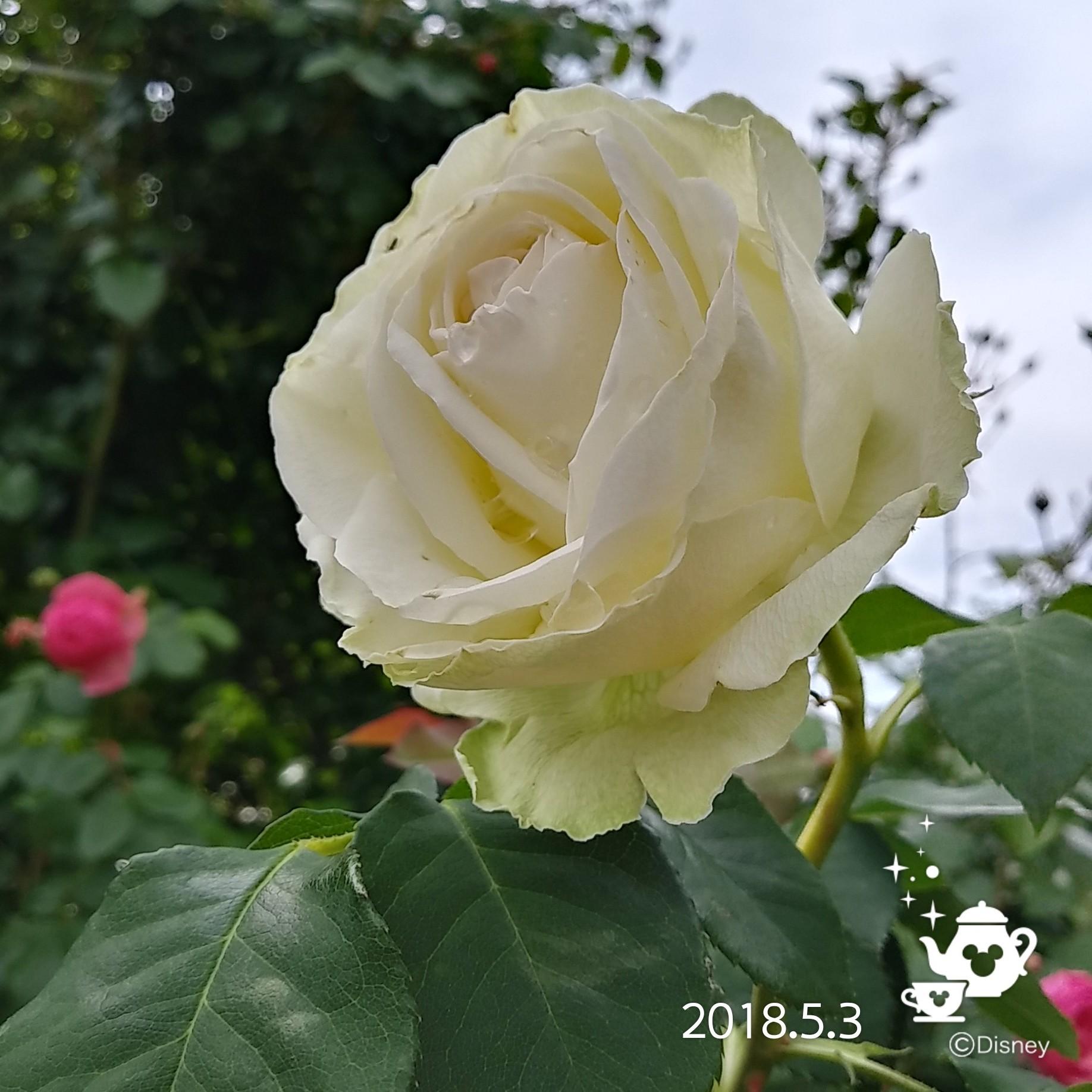 f0262033_16553258.jpg