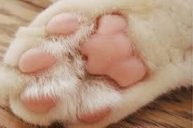 「 猫の子の 肉球まじまじ 桜色 」大宮 エリー_c0328479_23562449.jpg