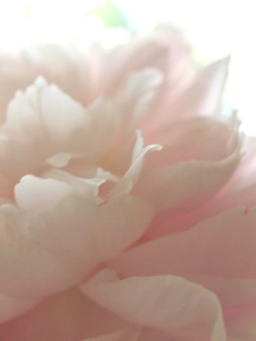 鎌倉花景「名残り」_a0135581_20363069.jpg