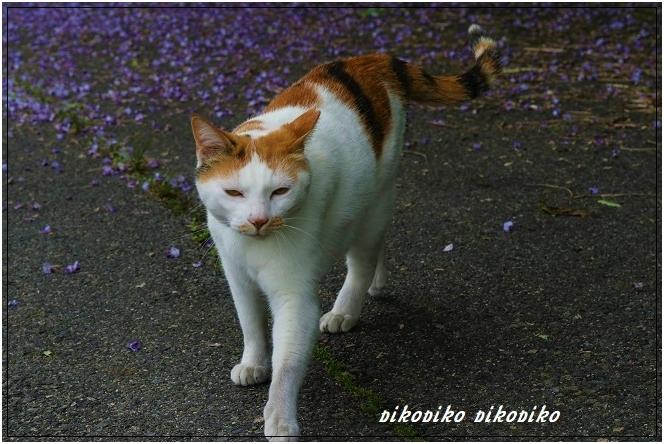 猫と山藤_e0353681_20150731.jpg
