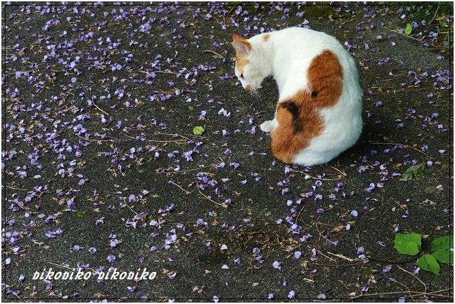 猫と山藤_e0353681_20180527.jpg