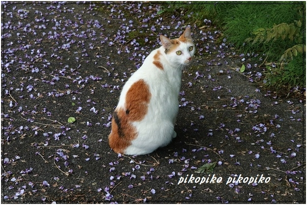 猫と山藤_e0353681_20183596.jpg