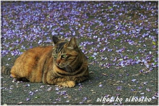 猫と山藤_e0353681_20190592.jpg