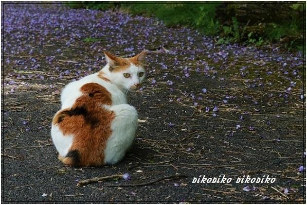 猫と山藤_e0353681_20200535.jpg