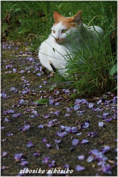 猫と山藤_e0353681_20210597.jpg