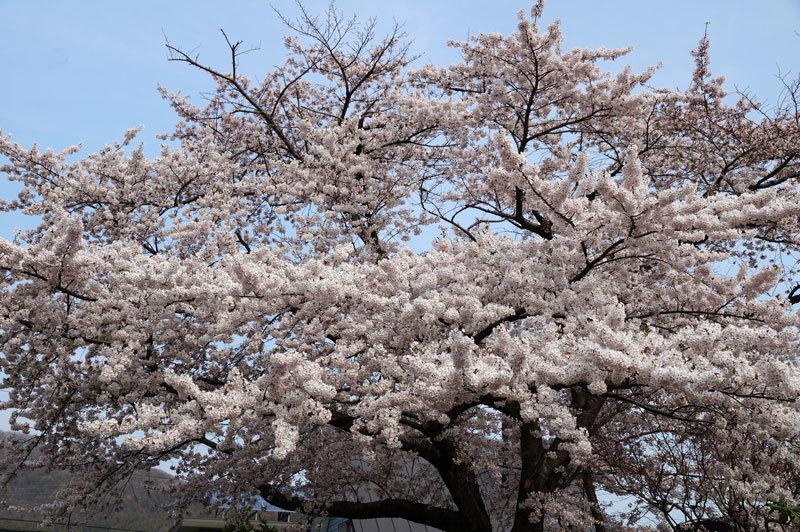 春爛漫_d0162994_07232303.jpg