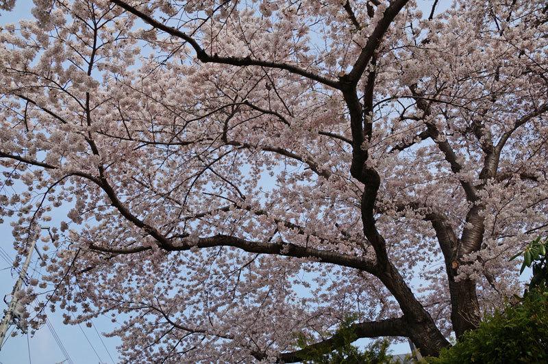 春爛漫_d0162994_07233962.jpg