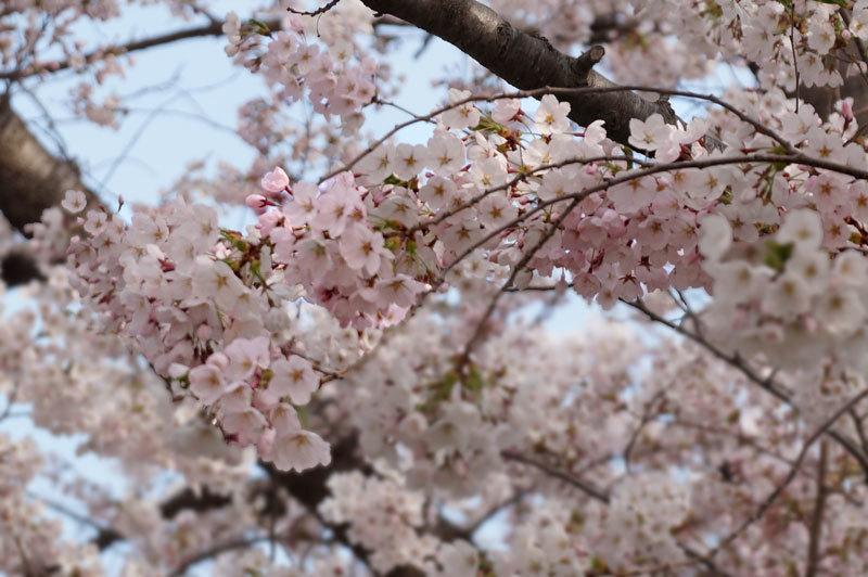 春爛漫_d0162994_07235594.jpg