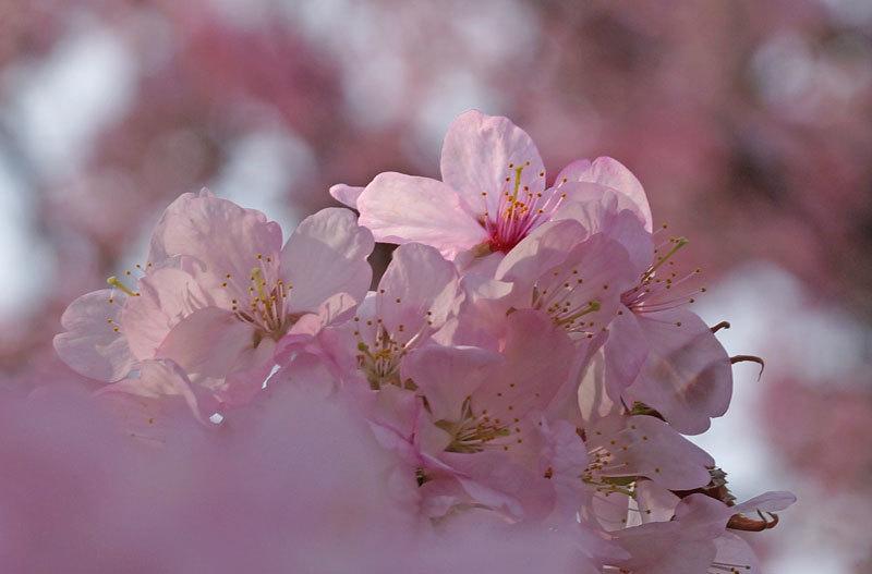 春爛漫_d0162994_07243343.jpg