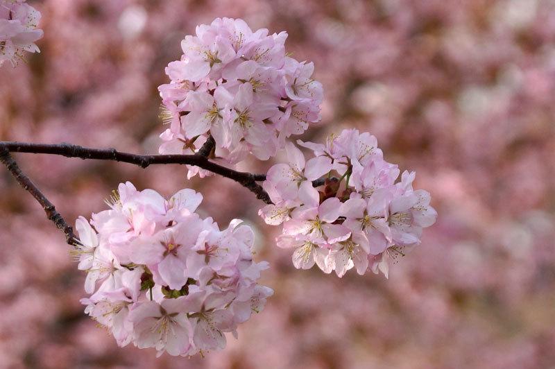 春爛漫_d0162994_07245632.jpg