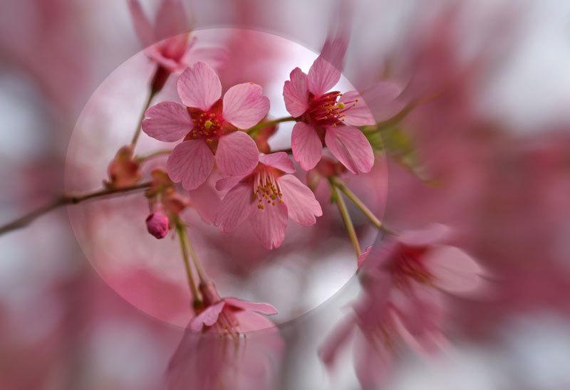 春爛漫_d0162994_07251834.jpg