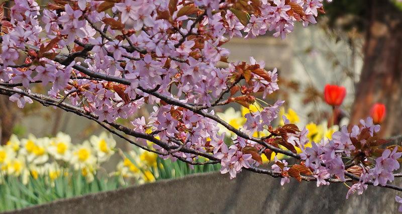 春爛漫_d0162994_07263671.jpg