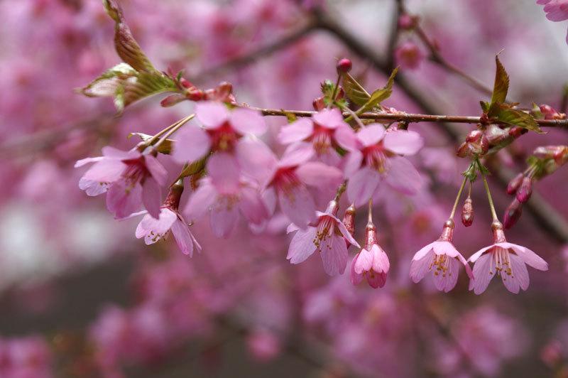 春爛漫_d0162994_07273902.jpg