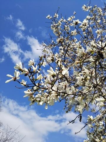 春を待ってた可愛い花達_f0316507_16271742.jpg