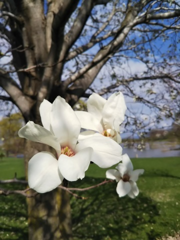 春を待ってた可愛い花達_f0316507_16273959.jpg