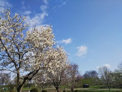 春を待ってた可愛い花達_f0316507_16280372.jpg