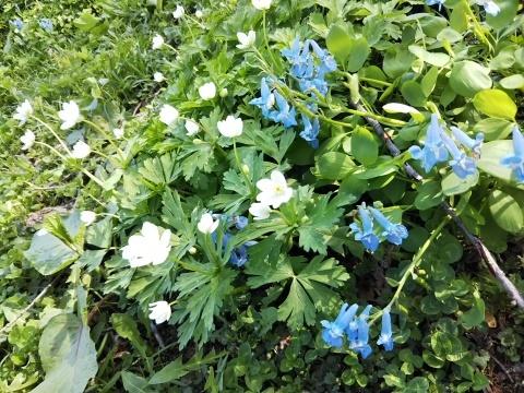 春を待ってた可愛い花達_f0316507_16290107.jpg