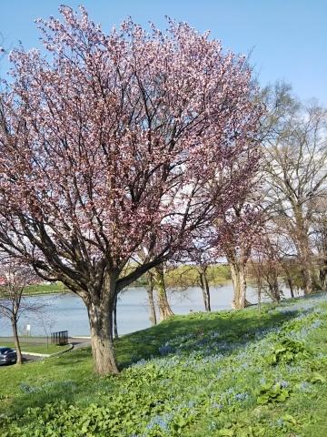 春を待ってた可愛い花達_f0316507_16301572.jpg