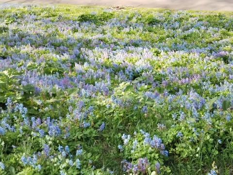春を待ってた可愛い花達_f0316507_16494675.jpg