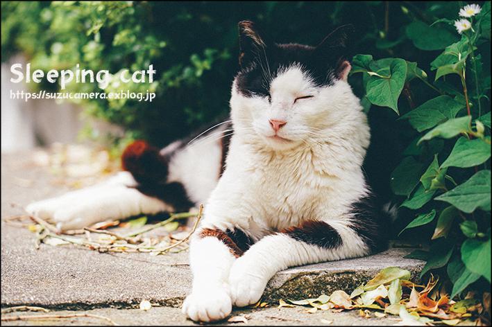 眠り猫_f0100215_00091352.jpg