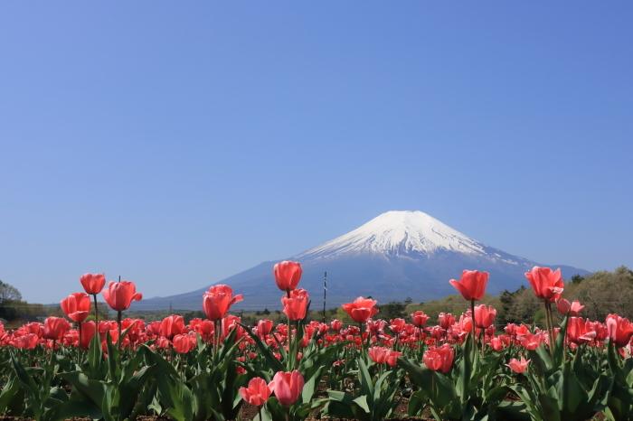 【花の都公園】_f0348831_01433762.jpg
