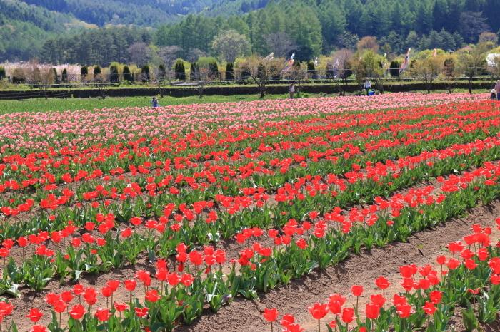 【花の都公園】_f0348831_01455028.jpg