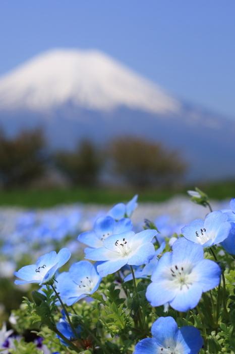 【花の都公園】_f0348831_01461499.jpg
