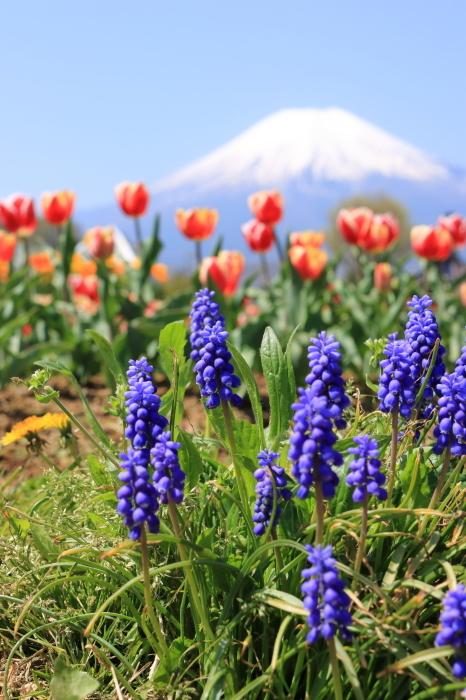 【花の都公園】_f0348831_01461946.jpg