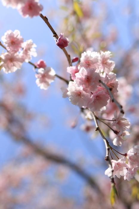 【花の都公園】_f0348831_01463151.jpg