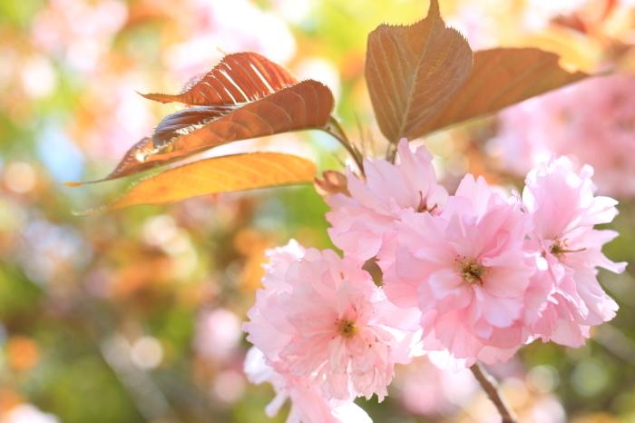 【花の都公園】_f0348831_01463846.jpg