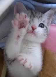 「 猫の子の 肉球まじまじ 桜色 」大宮 エリー_c0328479_13105315.jpg