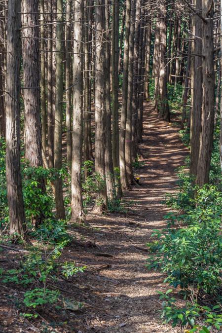今日の散歩、ちょっと遠回りして日和田山へ_b0010915_20440846.jpg