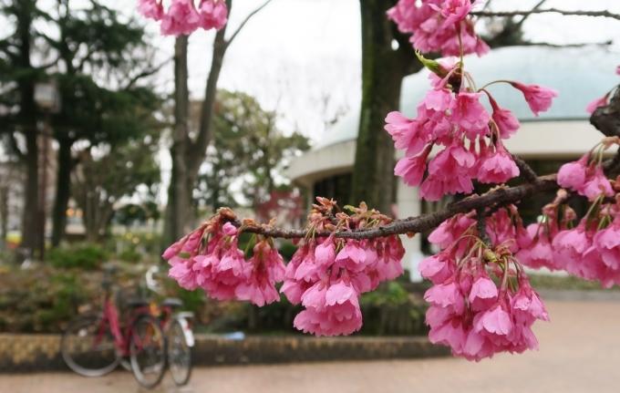 記録  3月のお散歩_e0348754_11113372.jpg