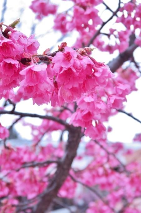 記録  3月のお散歩_e0348754_11131254.jpg