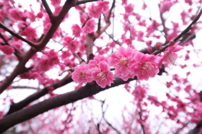 記録  3月のお散歩_e0348754_11222199.jpg