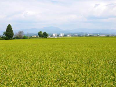『無農薬栽培にんにく』 まもなく芽カギ作業です!_a0254656_17513379.jpg