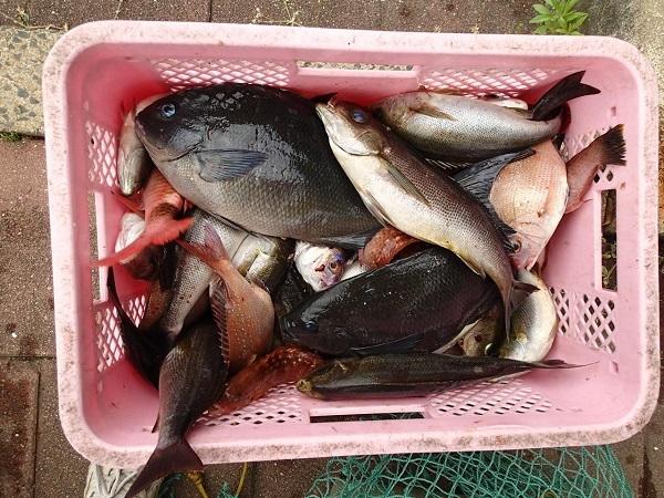 つばきマリーナ春の釣り大会♬_a0077071_14123669.jpg