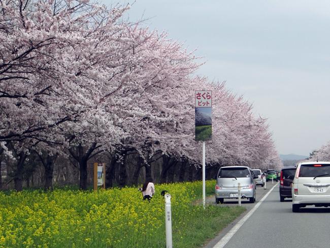 今年の桜ドライブは男鹿半島へ~~GAOも良かった~♪_a0136293_17080766.jpg