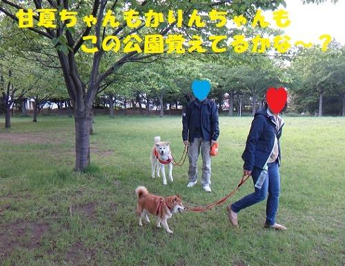 f0121712_00571544.jpg
