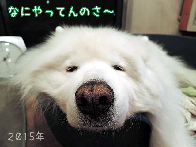 連休最終日_c0062832_19263386.jpg