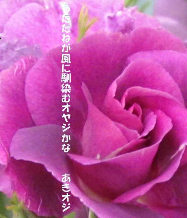 f0117041_05011356.jpg