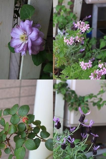 初夏の花を使ったアレンジメントと初夏のインテリア_f0374092_00495300.jpg