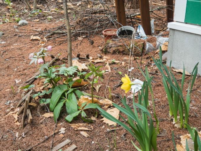 G.W.最終日です。エゾリス君は衣替え、春の花開花中!_f0276498_22022590.jpg