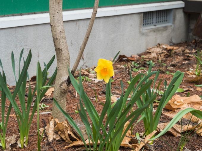 G.W.最終日です。エゾリス君は衣替え、春の花開花中!_f0276498_22034866.jpg