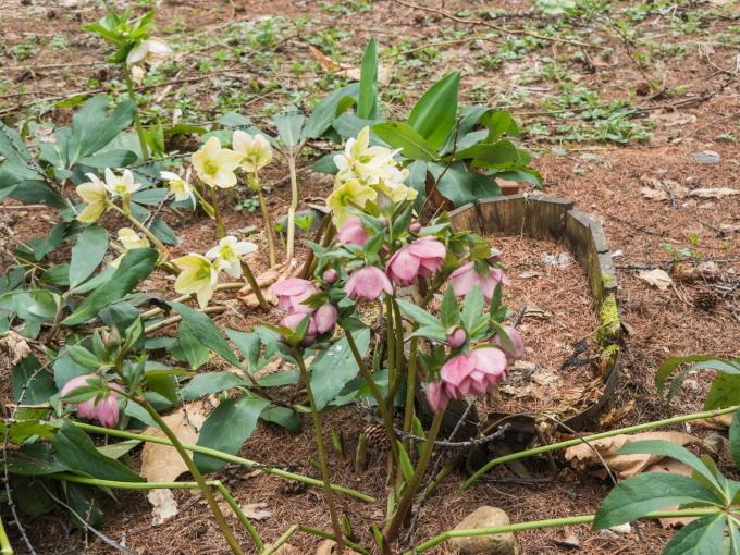 G.W.最終日です。エゾリス君は衣替え、春の花開花中!_f0276498_22055284.jpg