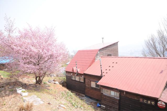 桜満開のGWでした!!_c0125899_16370140.jpg